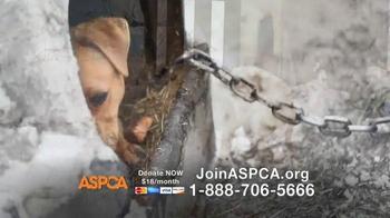 ASPCA TV Spot, 'This Winter' Featuring Allison Cardona - Thumbnail 6