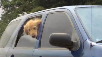 Shelter Insurance TV Spot, 'Car Dogs' - Thumbnail 1