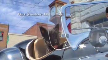 Shelter Insurance TV Spot, 'Car Dogs' - Thumbnail 4