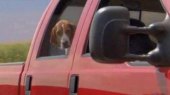 Shelter Insurance TV Spot, 'Car Dogs' - Thumbnail 7