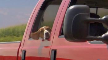 Shelter Insurance TV Spot, 'Car Dogs' - Thumbnail 8