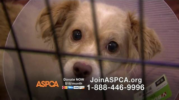 ASPCA TV Spot, 'End the Fear and Pain'