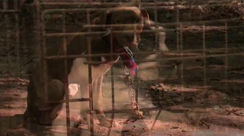 ASPCA TV Spot, 'End the Fear and Pain' - Thumbnail 2