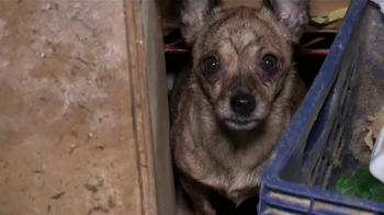 ASPCA TV Spot, 'End the Fear and Pain' - Thumbnail 3