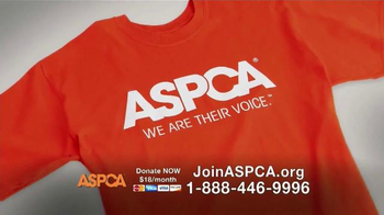 ASPCA TV Spot, 'End the Fear and Pain' - Thumbnail 8