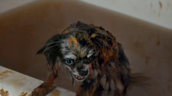 Scrubbing Bubbles Bathroom Cleaner TV Spot, 'New Pet' - Thumbnail 3