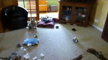 Bissell TV Spot, 'Pet Happens: Dachshund' - Thumbnail 2