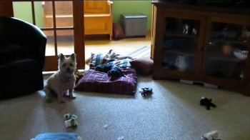 Bissell TV Spot, 'Pet Happens: Dachshund' - Thumbnail 3