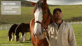 Budweiser TV Spot, 'Super Bowl 2015 Announcement: Lost Dog' - Thumbnail 5