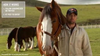 Budweiser TV Spot, 'Super Bowl 2015 Announcement: Lost Dog' - Thumbnail 6