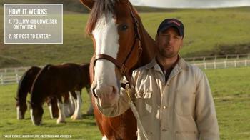 Budweiser TV Spot, 'Super Bowl 2015 Announcement: Lost Dog' - Thumbnail 8