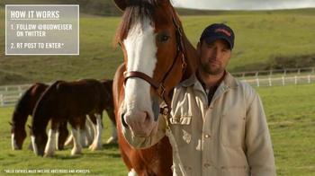 Budweiser TV Spot, 'Super Bowl 2015 Announcement: Lost Dog' - Thumbnail 9