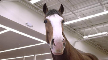 Budweiser Super Bowl 2015 Preview TV Spot, 'Clydesdale Beer Run' - Thumbnail 4