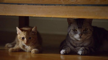 Friskies Super Bowl Teaser TV Spot, 'Dear Kitten: Regarding the Big Game' - Thumbnail 3