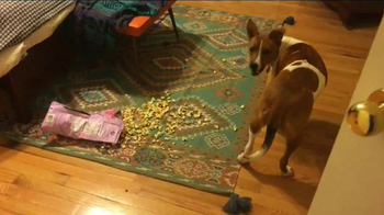 Bissell TV Spot, 'Pet Happens' - Thumbnail 4