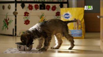 Pedigree TV Spot, 'Puppy Bowl XI'