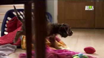 Pedigree TV Spot, 'Puppy Bowl XI' - Thumbnail 5