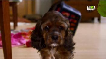 Pedigree TV Spot, 'Puppy Bowl XI' - Thumbnail 6
