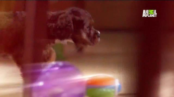 Pedigree TV Spot, 'Puppy Bowl XI' - Thumbnail 7