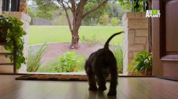 Pedigree TV Spot, 'Puppy Bowl XI' - Thumbnail 8