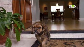 Pedigree TV Spot, 'Puppy Bowl XI' - Thumbnail 9