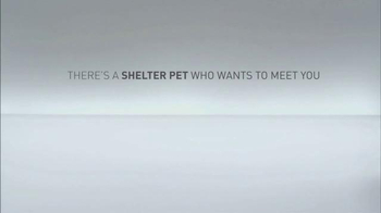 The Shelter Pet Project TV Spot, 'Meet Jules, Amazing Shelter Pet!' - Thumbnail 6