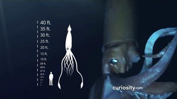 Curiosity.com TV Spot, 'Learn Something New'