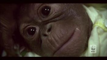 World Wildlife Fund TV Spot 'Baim' - Thumbnail 2