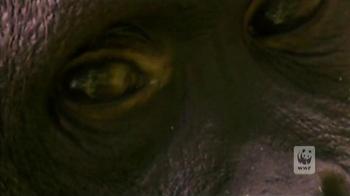 World Wildlife Fund TV Spot 'Baim' - Thumbnail 3
