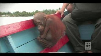 World Wildlife Fund TV Spot 'Baim' - Thumbnail 4