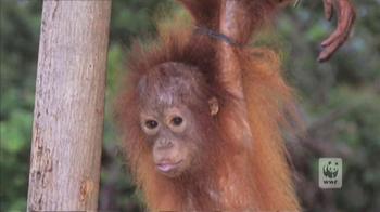 World Wildlife Fund TV Spot 'Baim' - Thumbnail 5