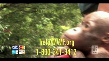 World Wildlife Fund TV Spot 'Baim' - Thumbnail 7