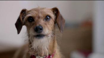 Skylanders Giants: Dog Trouble thumbnail