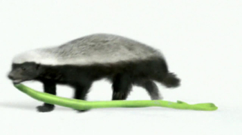 Wonderful Pistachios TV Spot 'Honey Badger' - Thumbnail 5