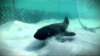 Oceana TV Spot, 'Sharks' Featuring January Jones