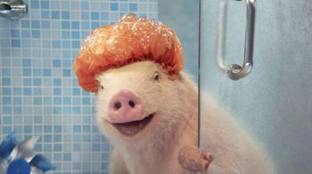 GEICO Mobile App TV Spot, 'Shower' Featuring Maxwell the Pig - 16 commercial airings