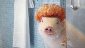 GEICO Mobile App TV Spot, 'Shower' Featuring Maxwell the Pig - Thumbnail 5
