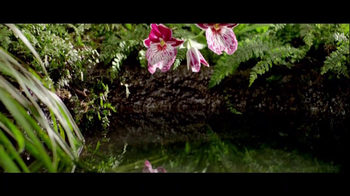 Truvia TV Spot, 'Nature's True Celebrities' - Thumbnail 5