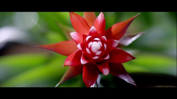 Truvia TV Spot, 'Nature's True Celebrities' - Thumbnail 6