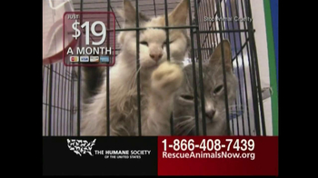 Humane Society TV Spot, 'Rescue Animals Now' Featuring Wendie Malick - 3495 commercial airings