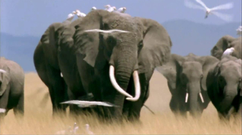NBA Cares TV Spot, 'Elephants' Featuring Tyson Chandler - Thumbnail 2