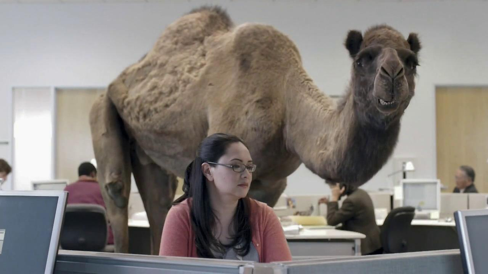 GEICO TV Commercial, 'Camel on Hump Day'