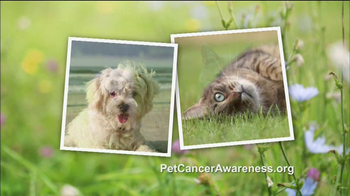 Blue Buffalo TV Spot, 'Pet Cancer Awareness' - Thumbnail 10