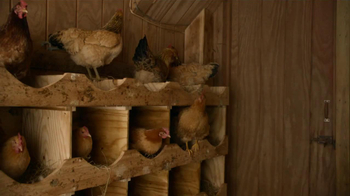 FedEx Ground TV Spot, 'Chickens' Featuring Denny Hamlin - Thumbnail 1