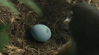Hallmark TV Spot, 'Mother Bird' - Thumbnail 2