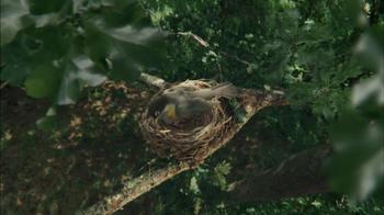 Hallmark TV Spot, 'Mother Bird' - Thumbnail 3