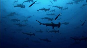 NBA Cares TV Spot, 'Endangered Animals' Featuring Pau Gasol - Thumbnail 9