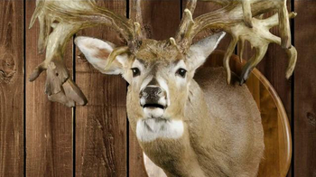 Legendary Whitetails TV Spot, 'Prized Buck' - Thumbnail 9