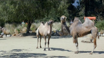 GEICO TV Spot, 'Camels: It's What You Do'