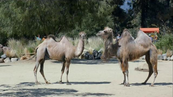 GEICO TV Spot, 'Camels: It's What You Do' - Thumbnail 8